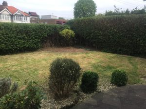 Garden mainenace in Enfield EN1 After - Ivan and sons North London Gardeners - Ivan and sons North London Gardeners